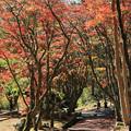 Photos: IMG_8730鶏足寺(旧飯福寺)・いろは紅葉