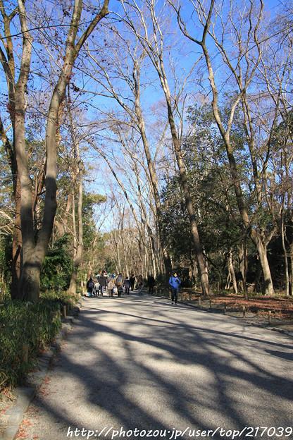 IMG_8746糺の森(表参道)