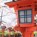 IMG_8773六孫王神社・灯籠と染井吉野