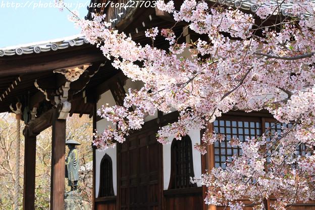 IMG_8816上品蓮台寺・染井吉野と大師堂