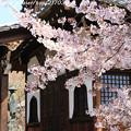 Photos: IMG_8816上品蓮台寺・染井吉野と大師堂