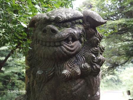 雷山雷神社 狛犬 PA120388