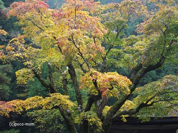 高野山 御室光台院 PB020463