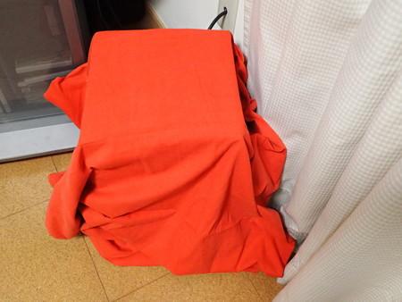 ポインセチアを赤くする方法 PB080839
