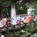 Photos: 祇園白川 P8150638
