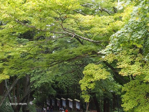 比叡山延暦寺 P8150697