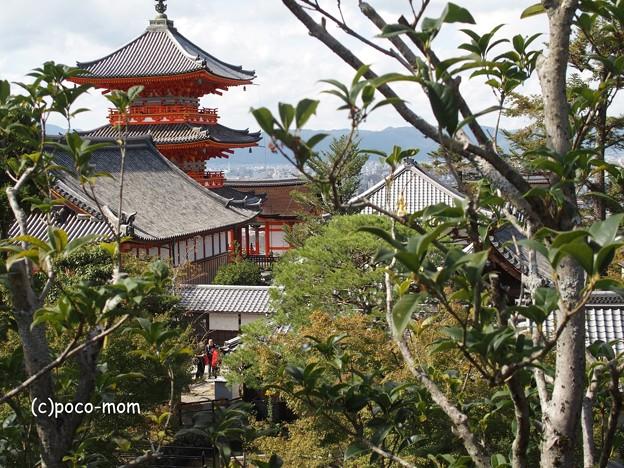 地主神社 PA140792