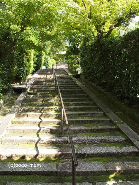京都 安養寺 円山公園 PA140839