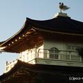 Photos: 金閣寺 PA210966
