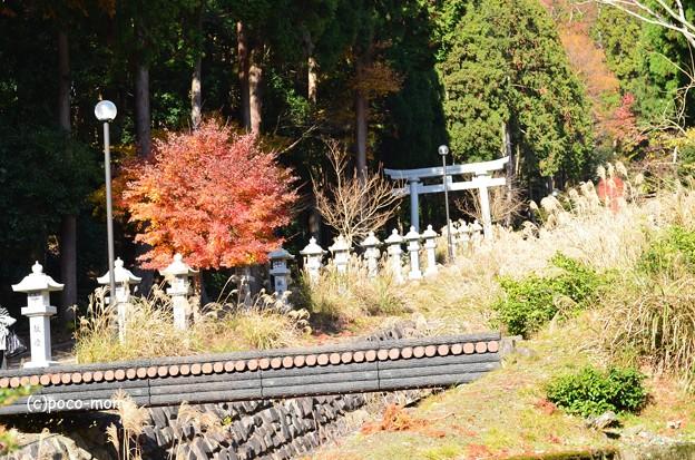 Photos: 菅浦集落 須賀神社 DSC_0765