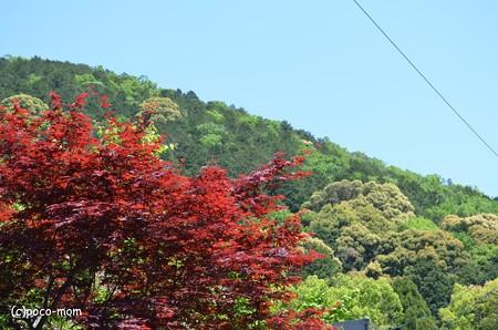 山科毘沙門堂 DSC_0220