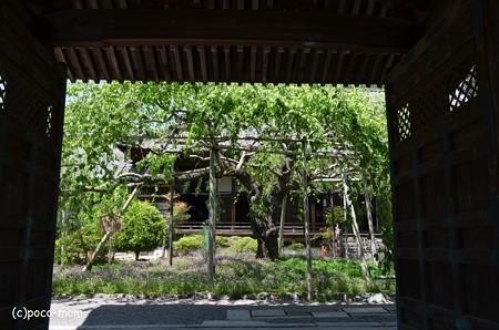 山科毘沙門堂 DSC_0269