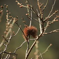 Photos: ウニの花