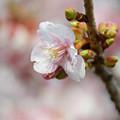 写真: 早春の彩