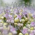 写真: つぼみぽんぽん
