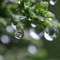 写真: 水滴1