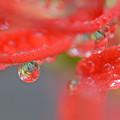 写真: 滴中花