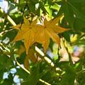 写真: 行く秋