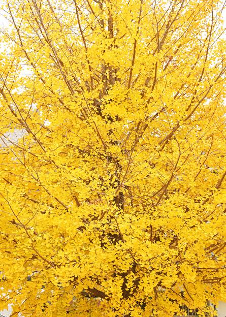 黄葉の彩1