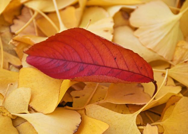 木の葉散る1