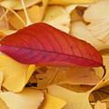 Photos: 木の葉散る1