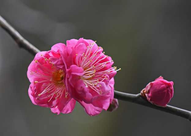 あでやかさに心弾む春