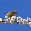 Photos: 花鳥