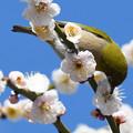 Photos: 花鳥1