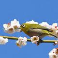 写真: 春の陽ざしに1