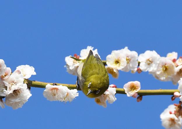 春の陽ざしに2