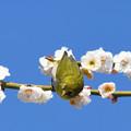写真: 春の陽ざしに2
