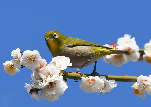 写真: 春の陽ざしに3