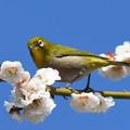 Photos: 春の陽ざしに3