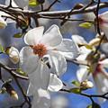 写真: 春を告げる花