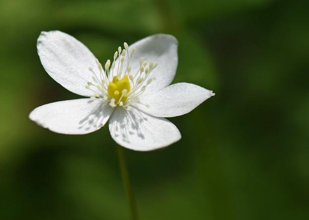 可憐な花1