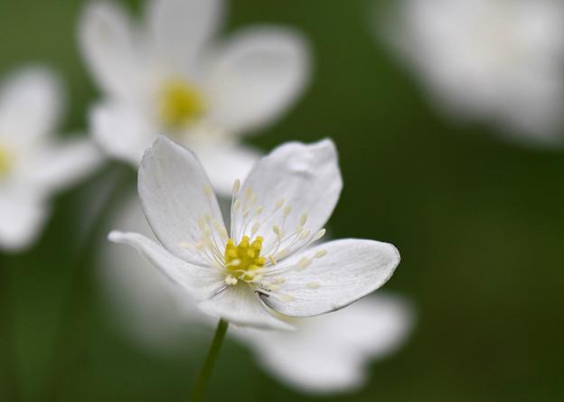 可憐な花2