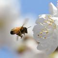 蜜と花粉を集めて2