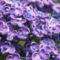 淡紫に映える