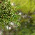 写真: 緑力