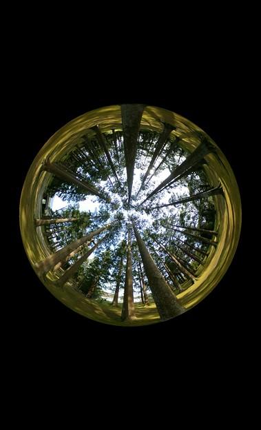 飫肥杉の森