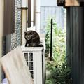 写真: 猫撮り散歩1996