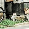写真: 猫撮り散歩1997