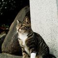 写真: 猫撮り散歩1998