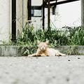 写真: 猫撮り散歩1999