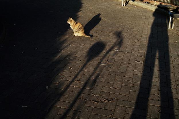 猫撮り散歩ZOOO