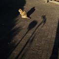 写真: 猫撮り散歩ZOOO