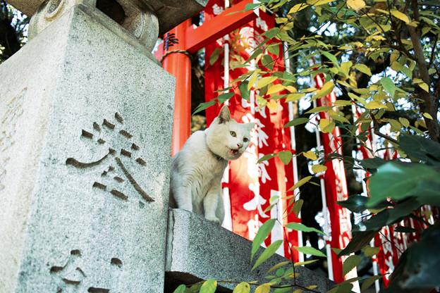 猫撮り散歩2000