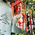 写真: 猫撮り散歩2000