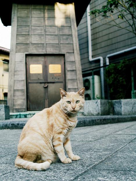 猫撮り散歩2003