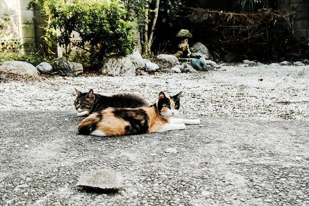 写真: 猫撮り散歩2004